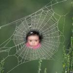 Haz colgar tu foto en una hermosa tela de araña