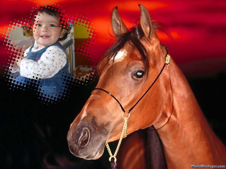 fotomontaje-caballo