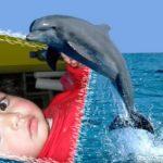 Fotomontaje con un delfín gratis en Fotomolduras.com