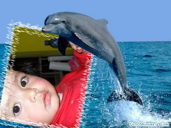 fotomontaje-delfin