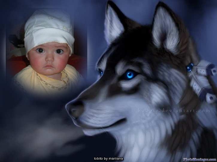 fotomontaje-lobo