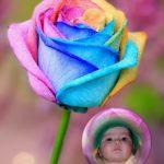 Fotomontaje con una rosa multicolor