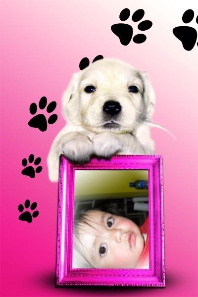 fotomotaje-perrito