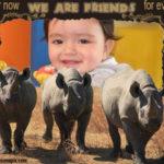 Marcos para foto con tres rinocerontes