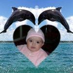 Fotomontaje de amor con dos delfines