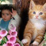 Editar fotos gratis con lindos gatitos