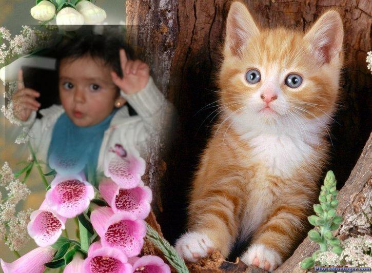 fotomontaje-gatito