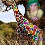 Fotomontaje online con una jirafa