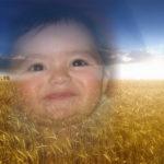 Fotomontaje gratis en un sembrado de trigo