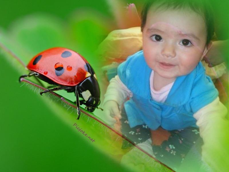 700-864718В© Martin RuegnerClose-Up of Ladybug
