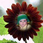 Fotomontaje online con flores: Dalia