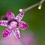 Hacer fotomontajes en linea en una flor de azucena