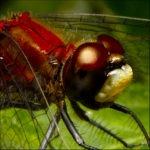 Macroshots de insectos por Designbeep