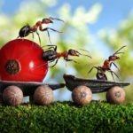 Fotos macro de hormigas por Andrey Pavlov