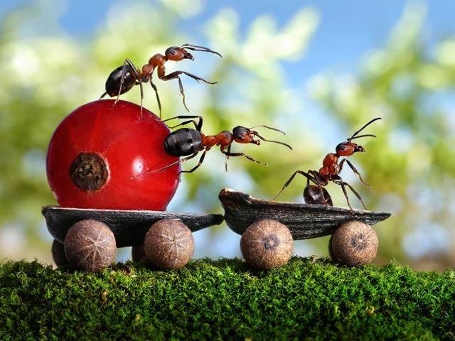 macros-hormigas-01