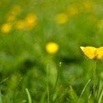 Profundidad de campo en Fotografía floral
