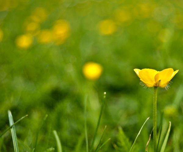 Profundidad de campo en Fotografía floral-01