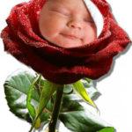 Fotomontaje en una rosa por el día de la madre