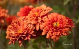 fondos de pantalla de flores-01