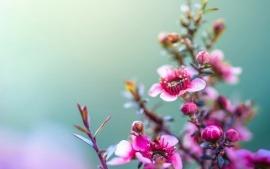 fondos de pantalla de flores-02