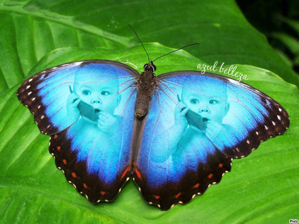 belleza en tus fotomontajes con mariposas