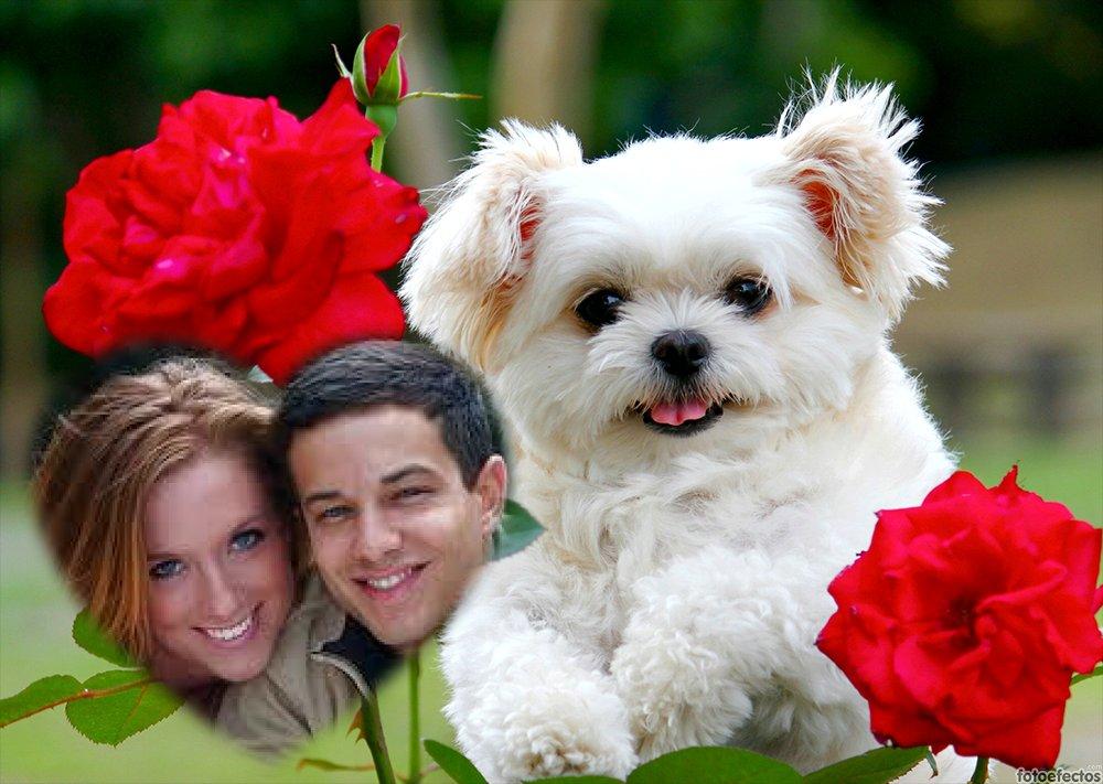 El más tierno fotomontaje de amor gratis online